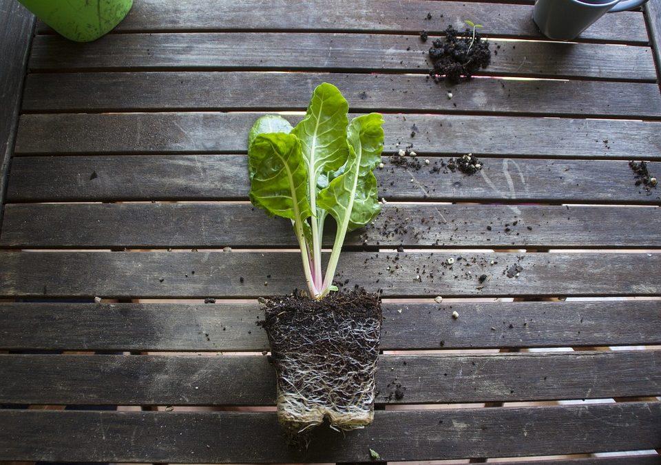 Où on trouve souvent des sols argileux?